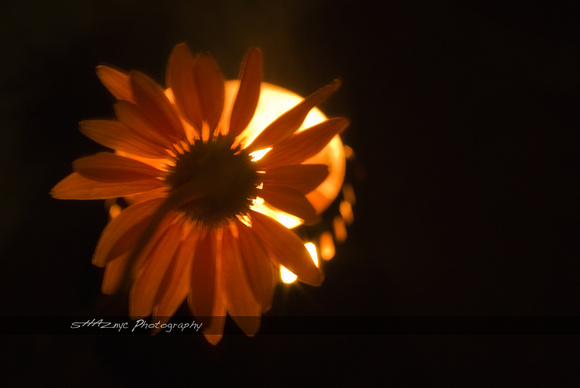 Flower On Fire
