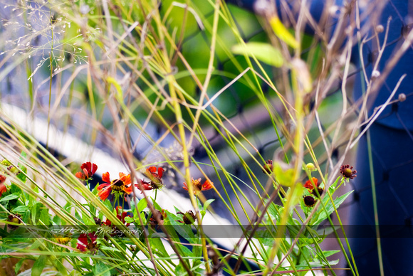 High Line Foliages_04
